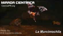 Mirada Cientifica Podcast - La Murcimochila